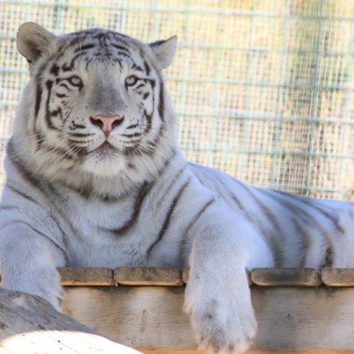 Sendaviva 2019 8 Tigre MG 5895
